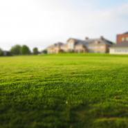 A crabgrass-free yard. Learn how to get rid of crabgrass