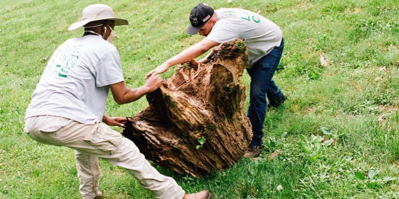 Lawn technicians removing tree stump
